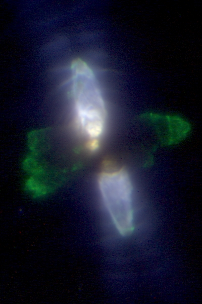 Keck Observatory Laser Guide Star Adaptive Optics